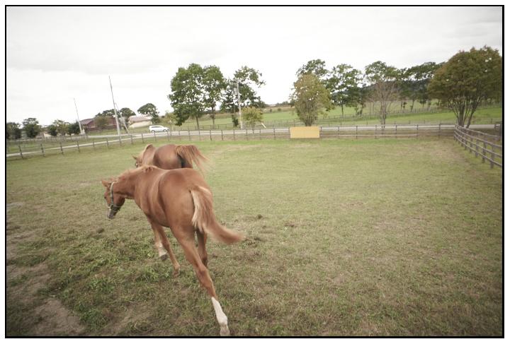 Admire-Lapis&Hers2012_120924_Tsuji-Farm_2296DLUX.jpg