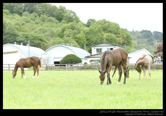 Masanobu-Sasajima-Farm_110923_Urakawa_30510DX.jpg